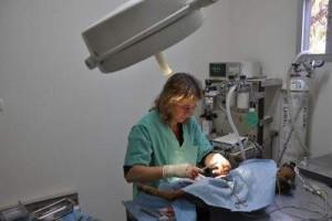 surgery_6_391543376