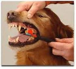 teeth_3_1937946607
